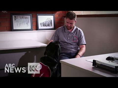 Assistance dogs return freedom to PTSD-afflicted veterans