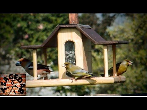 Ptačí krmítko / DIY Bird feeder