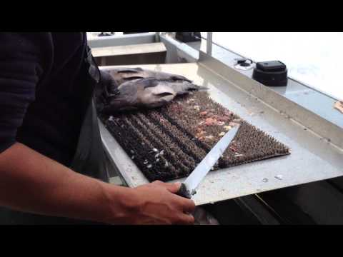 How to Fillet Rockfish