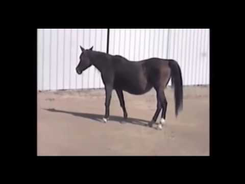 Horse ready to be put down and then....