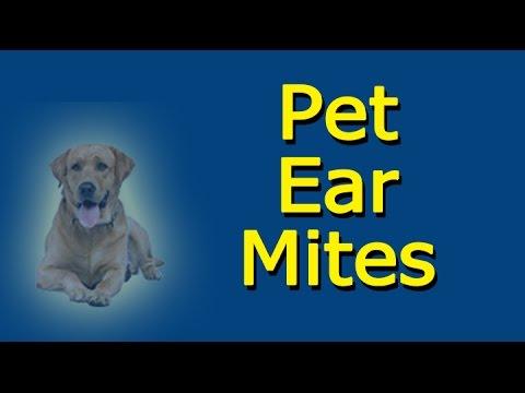Pet Ear Mites