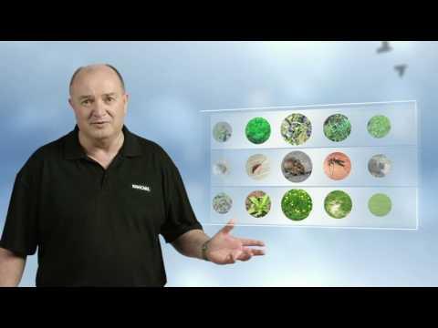 Kiwicare  Lawn Care Problem Solver TVC