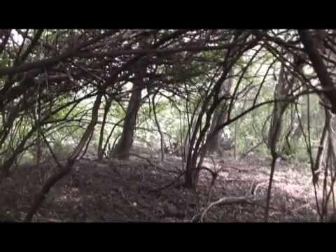 Making of the New Leaf Arboretum