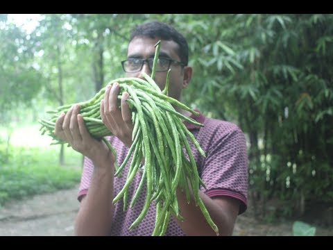 Farm fresh long bean fry recipe | Village food borborti vaji recipe