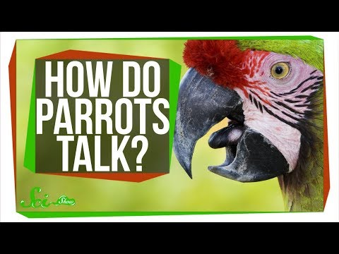 How Do Parrots Talk Like Humans?