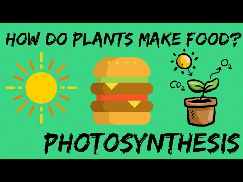 PHOTOSYNTHESIS : HOW DO PLANTS MAKE FOOD? | HOW DO PLANTS DISTRIBUTE SEEDS