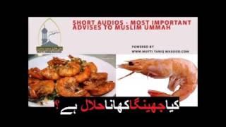 Are Prawns Halal in Islam By Mufti Tariq Masood