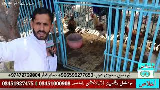 Hens business by Ikhlas Social Welfare Organization  in Thana Malakand Rozgar 53