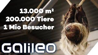 Arbeiten in der größten Zoohandlung der Welt: Nix mit faul rumhängen! | Galileo | ProSieben