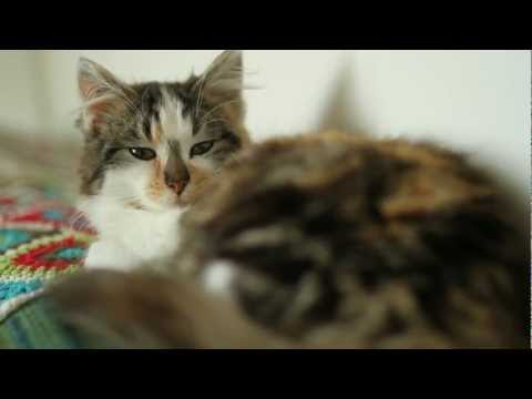Kittens ~ Melbourne ~ Ragamuffin Pet Photography ~ Home Movies
