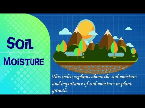 Soil Moisture // Soil Water // Importance of Soil Moisture // Soil Moisture for Plant //
