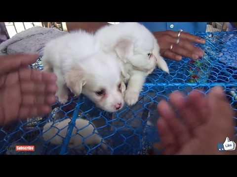 Galiff Street Dog Market Kolkata |Best place to buy pet Puppy Dogs