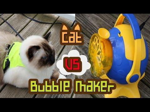 Cat VS Bubble maker