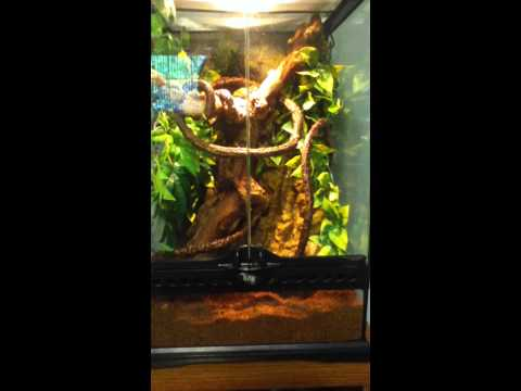 How To Make A Terrarium For Tree Frogs