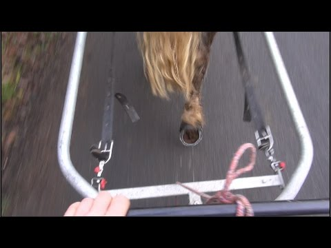 How to desensitise a carriage driving horse to unusual or loud noise | Training method for horses