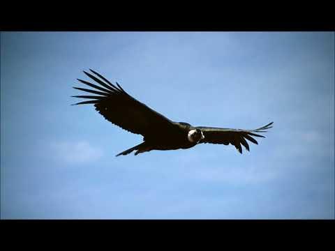 El Condor Pasa Ringtone 2 | Ringtones for Android | Instrumental Ringtones