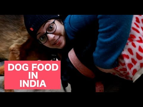 DOG FOOD IN INDIA TIPS