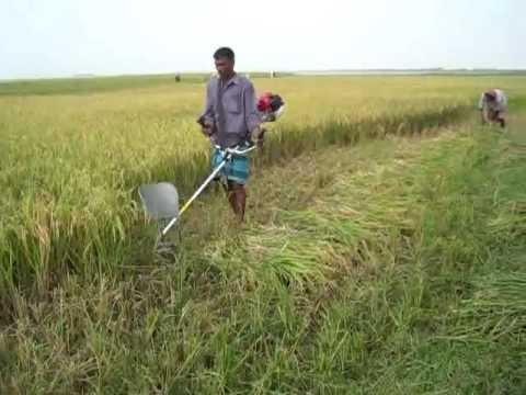 Paddy Rice Cutter