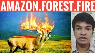 Amazon Forest Fire Explained   Tamil