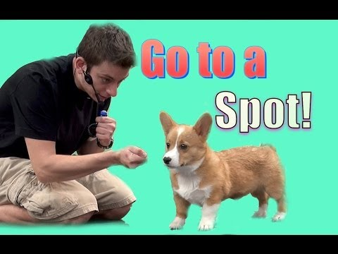 How To Teach Your Dog to Go to a Spot (Go to your mark)
