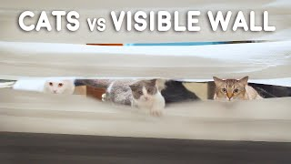 Cats vs Visible Wall
