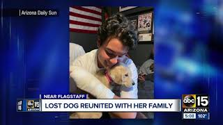 Puppy who disappeared after owner crashes in AZ found 13 days later