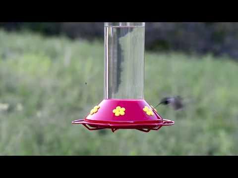 """Perky-Pet® """"Our Best"""" Glass Hummingbird Feeder"""