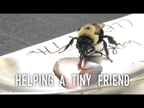 Helping a Tiny Friend - We Fed an Exhausted Bee