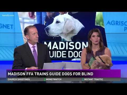 Madison FFA trains guide dogs for the blind