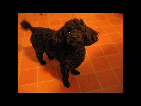 Stop dog barking for attention - dog attention training