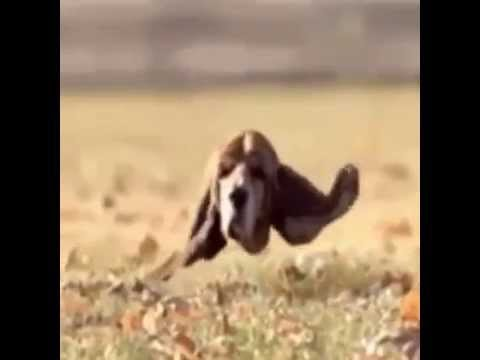 Floating dog head