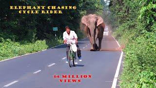 Elephant Chasing Cycle Rider.