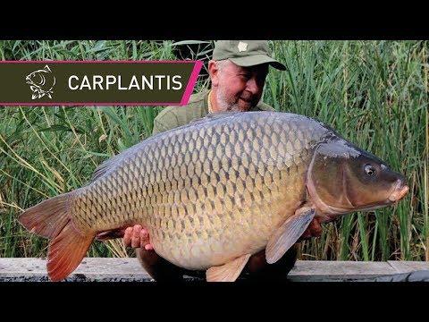 50lb carp at Carplantis with Steve Briggs