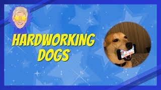Your Best Moments of Hard-Working Dogs