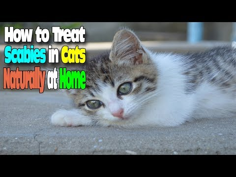 HOW TO TREAT SCABIES IN CATS NATURALLY AT HOME
