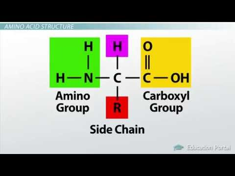 1 How Amino Acids Form Protein