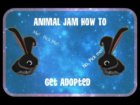 Animal Jam - How To Get Adopted