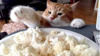 Sneaky CATS & DOGS stealing food! TOO FUNNY!