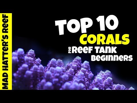 Top 10 Corals For Reef Tank Beginners