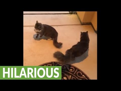 Weirdo cats love to roll around on concrete