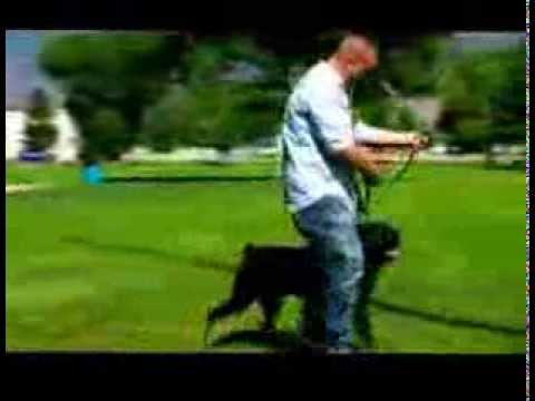 Dog Training Tips -  How to Get Your Dog to Listen!