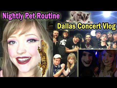 My Nightly Pet Routine -  Dallas VLOG w/ Hotel Books, Meeting Social Repose (Oct.22nd, 2017)