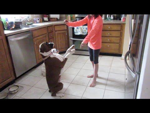 How to Train Your Dog! (WK 217) | Bratayley