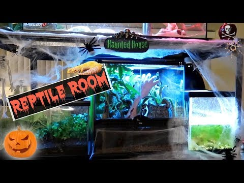 Reptile Room Tour October 2017 (Halloween Themed)