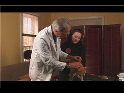 Cat Care & Health : How to Apply Frontline to a Cat