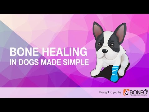 Broken Bones in Dogs: How the Healing Process Works