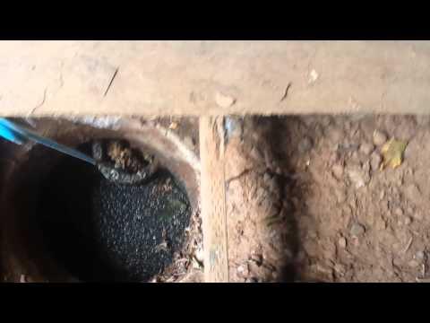 Septic tank inlet baffle plugged
