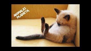 Animals Are Idiots #1 🔴 Funny Animals Videos | Animales Divertidos Video Recopilación