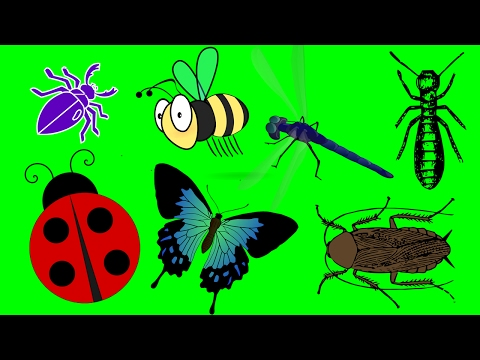 List of insects and bugs video Insects for kids watch learn Children (Kids Series #3) @BabySchool.TV