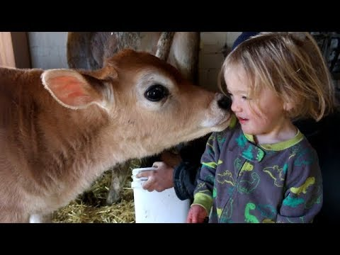Getting LESS milk...on purpose!?
